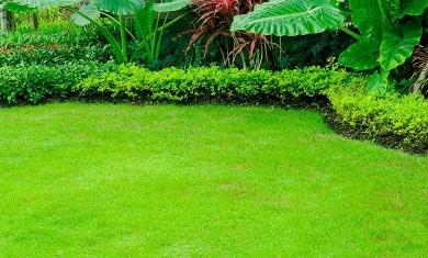 pourquoi peindre sa pelouse tout jardin direct. Black Bedroom Furniture Sets. Home Design Ideas