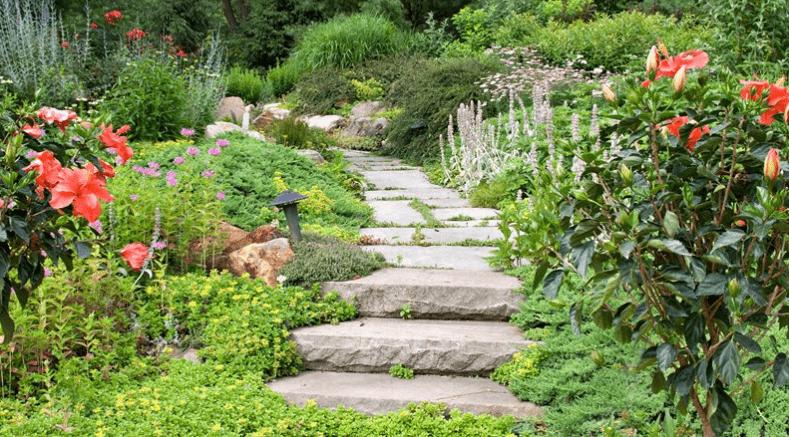 tout jardin direct c'est des conseils et des avis sur le jardinage