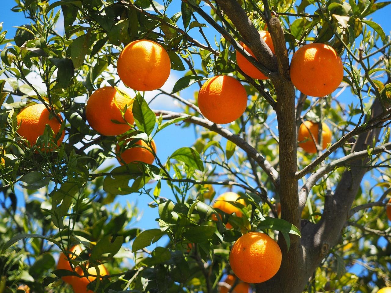 Comment Planter Un Arbre Fruitier arbres fruitiers pour petits jardins de ville : lesquels