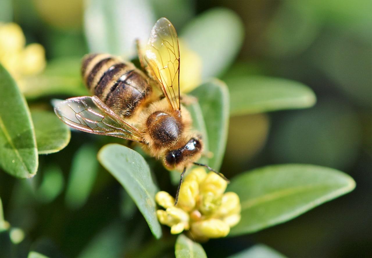 Accueillir des abeilles solitaires