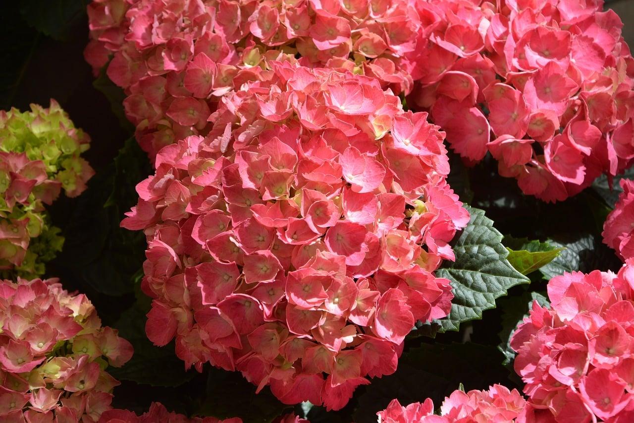 comment multiplier gratuitement plantes et fleurs tout. Black Bedroom Furniture Sets. Home Design Ideas