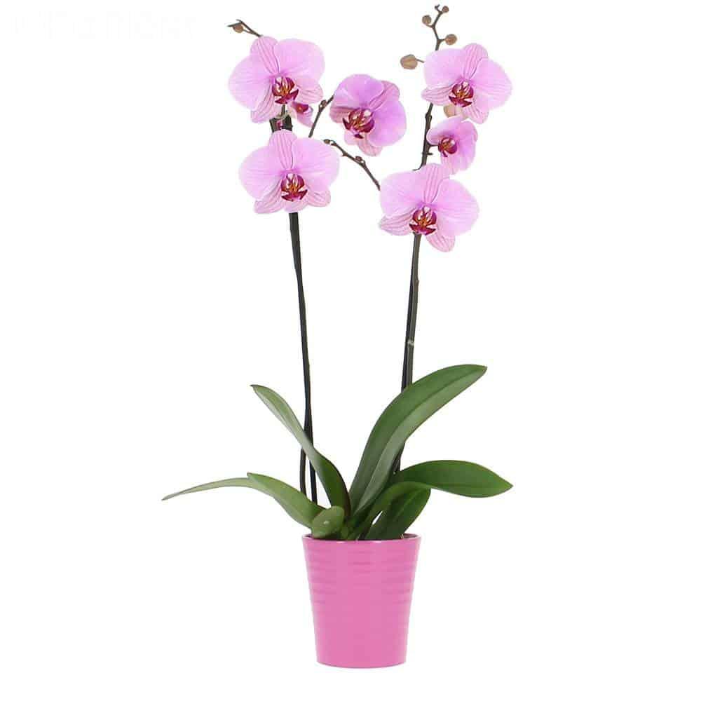 Comment Planter Une Orchidée quelques astuces pour entretenir votre orchidÉe - tout
