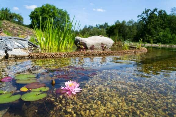 sublimer son jardin avec un bassin d'agrément