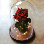 rose la belle et la bête