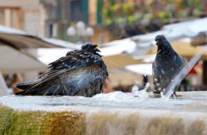 aménager espace pour oiseaux jardin