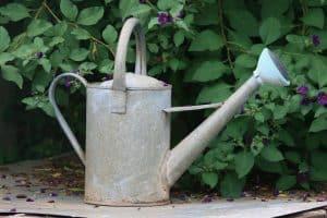 planter arbuste et arbre avant la sainte catherine