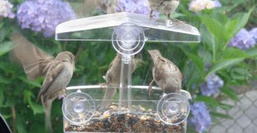 attirer oiseaux jardin