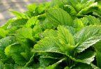 Plantes pour lutter contre les insectes
