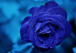 tradition offrir fleurs