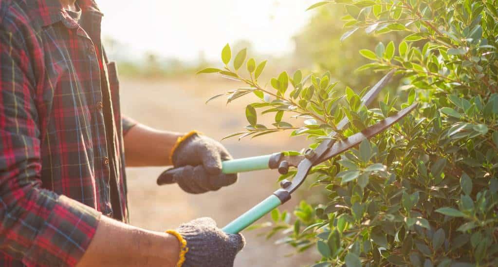 Aménager un jardin en prévision de l'hiver