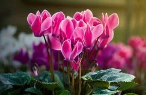 Meilleures plantes vivaces pour fleurir allée