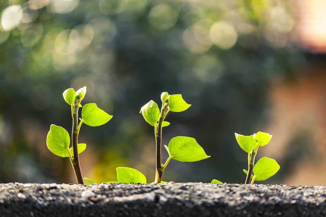 Booster la croissance des plants