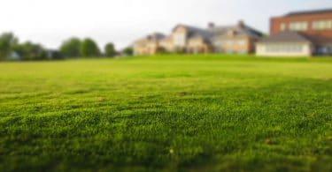 Tonte de la pelouse