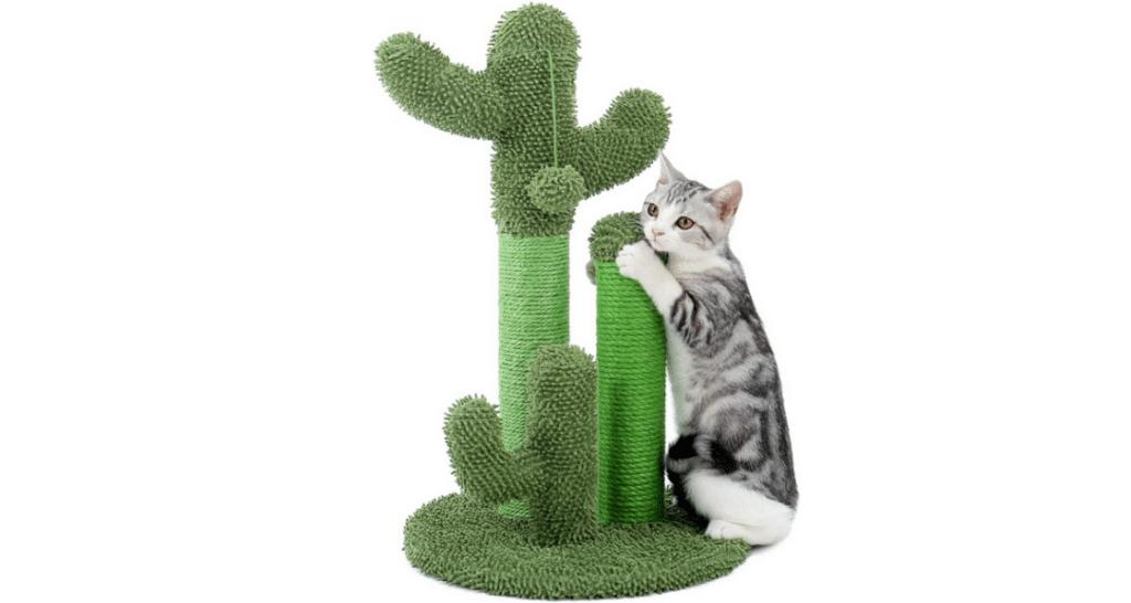 Comparatif pour choisir le meilleur arbre à chat cactus