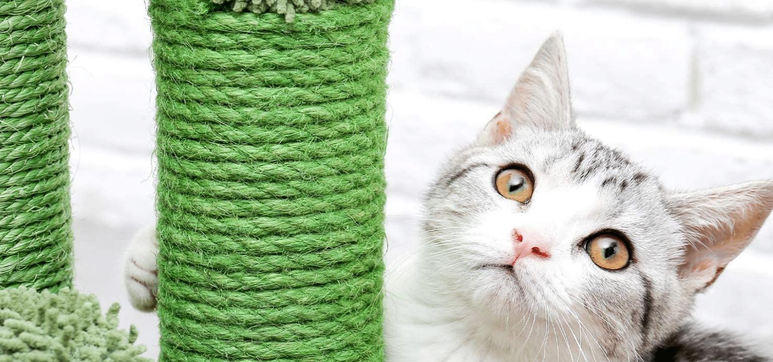 Meilleur arbre à chat cactus