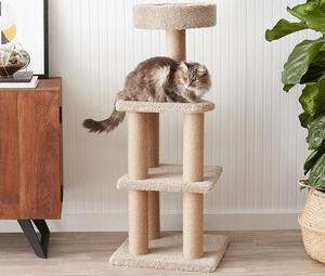 Test et avis sur l'arbre à chat Amazon Basics
