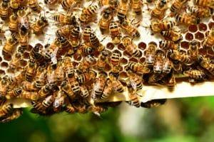 installation d'une ruche dans son jardin
