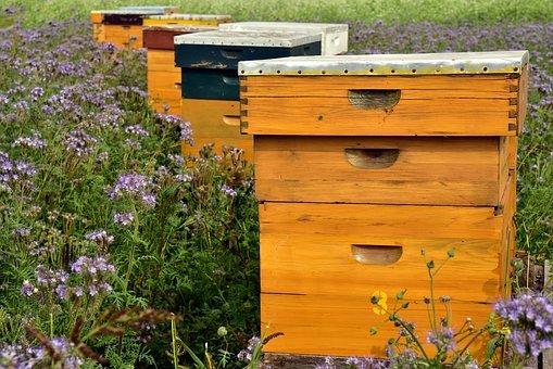 installer une ruche dans son jardin